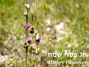 Passover_2015